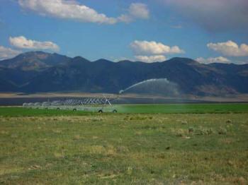 Alfalfa field in Nye County, Nevada.